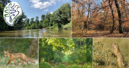 Der Naturpark Lunca Mureşului