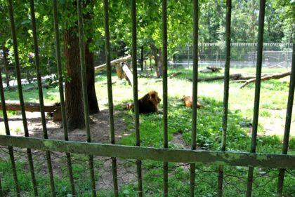 Tierpark / Zoo