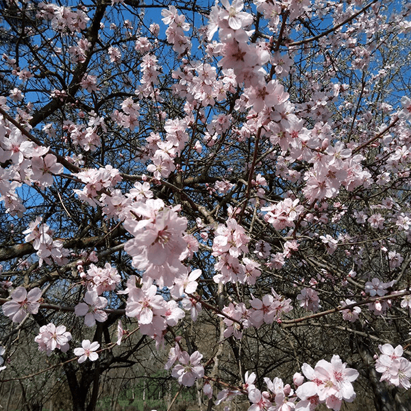 Spring in Romania